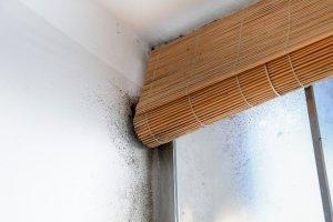 Moisissure et salpêtre sont le signe d'une mauvaise ventilation. (© zlikovec - Fotolia.com)